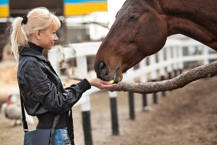 Vrouw voedert paard achter hek