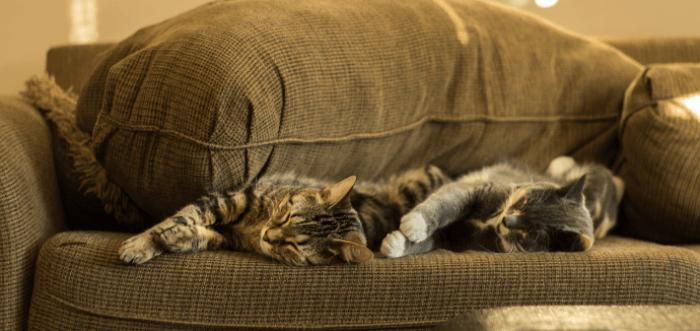 waar moet je opletten als je een kat kiest