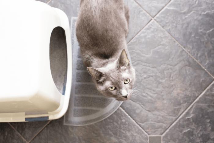 Kat aan kattenbak