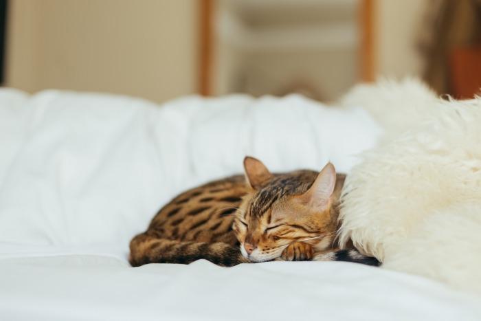 Bruine gestreepte kat slaapt op witte bank