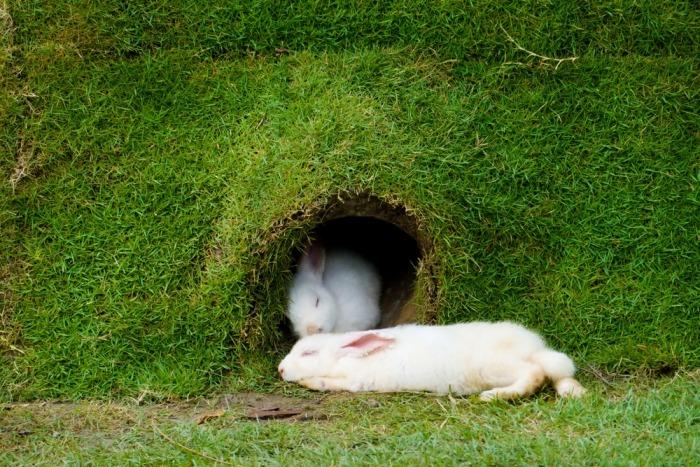 Witte konijnen in tunnel onder gras