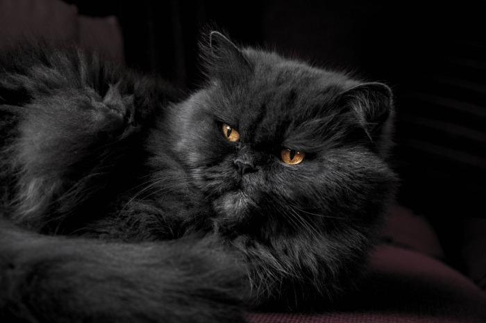 Zwarte kat die boos kijkt