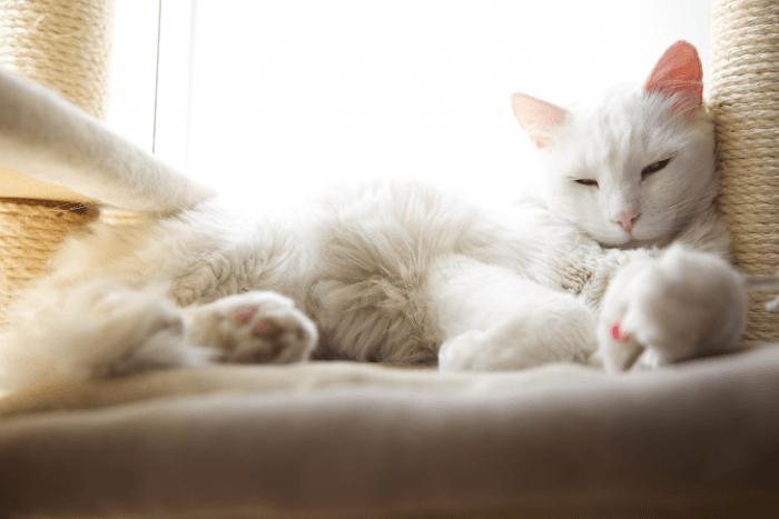 slapende kat op krabpaal