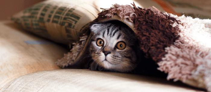 Geef je kitten geborgenheid met een warme kruik, dekens of handdoeken