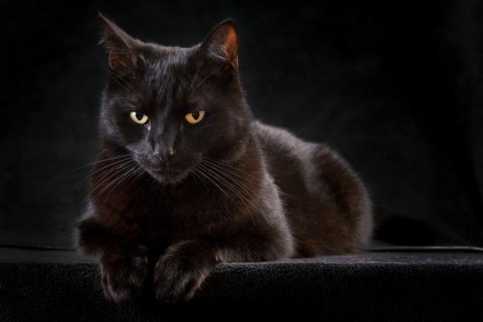 Zwarte kat zit voor donkere achtergrond