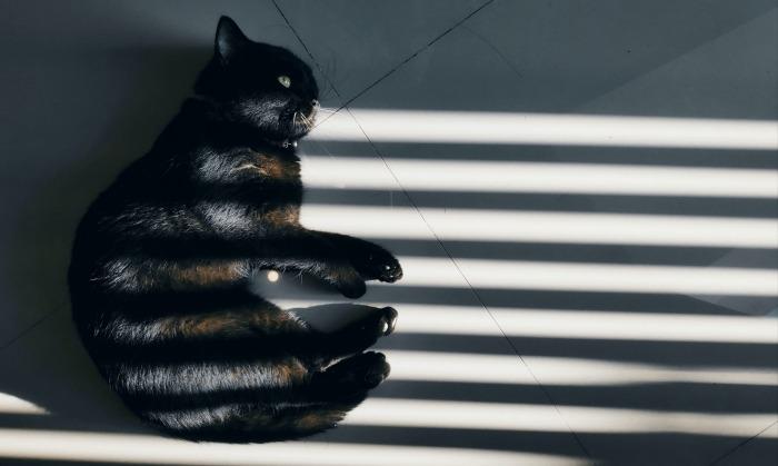 Zwarte kat zont in schaduw van lamellen