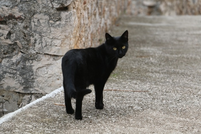 Zwarte kat loopt weg van camera in straat