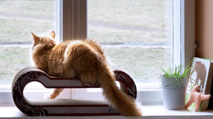 Een kat op een appartement
