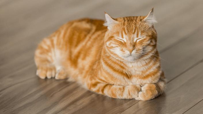 Katten knipogen